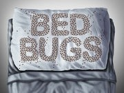 Bed Bugs Drawn to Red and Black Colors